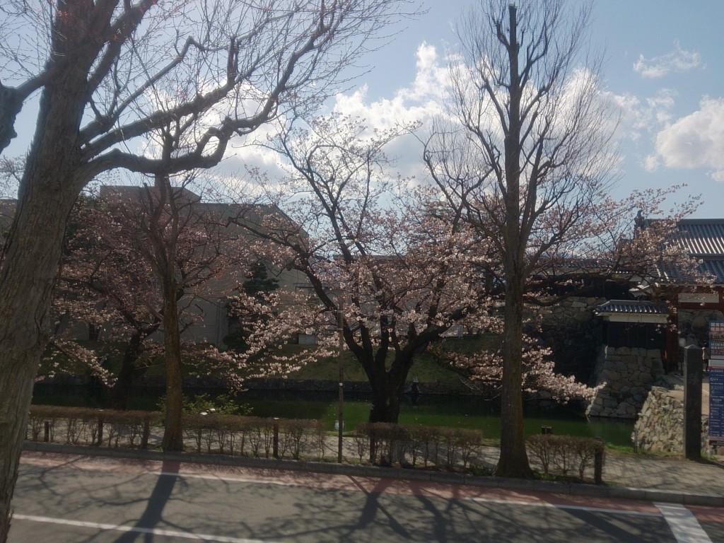 城と桜-左